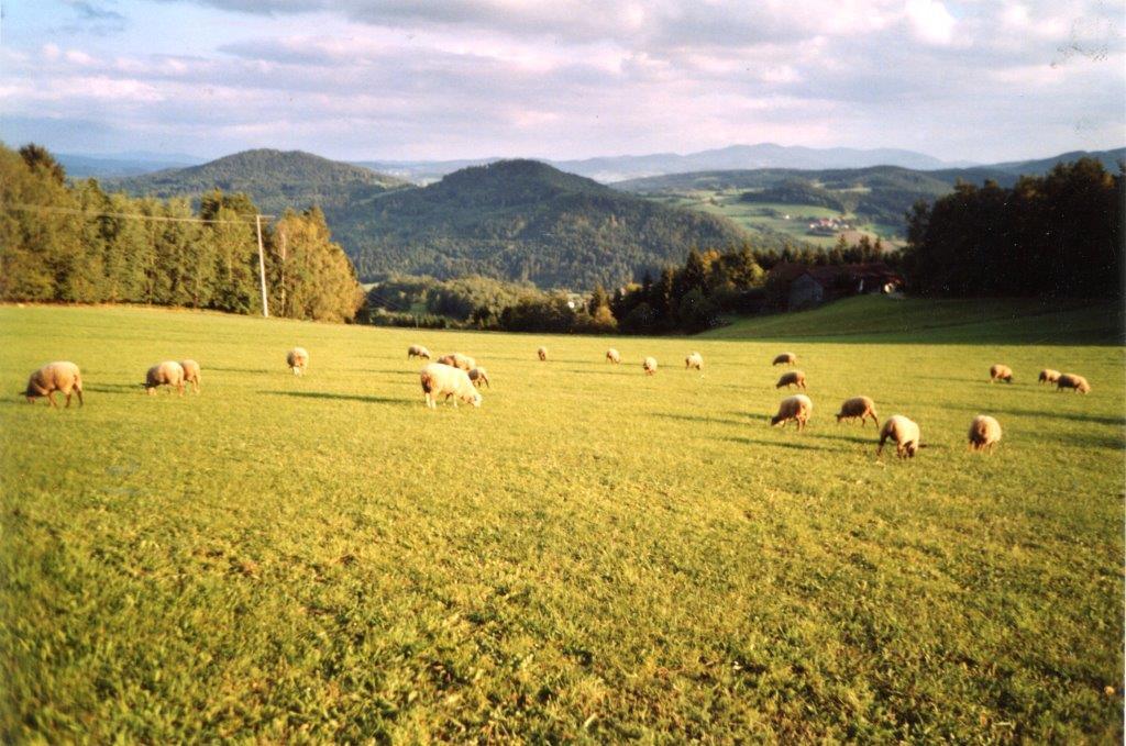 Ferienwohnung Preiß F**** in Viechtach