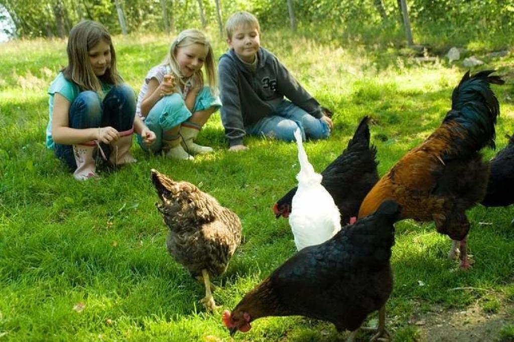 Kinderparadies + Bio-Bauernhof in Schönberg