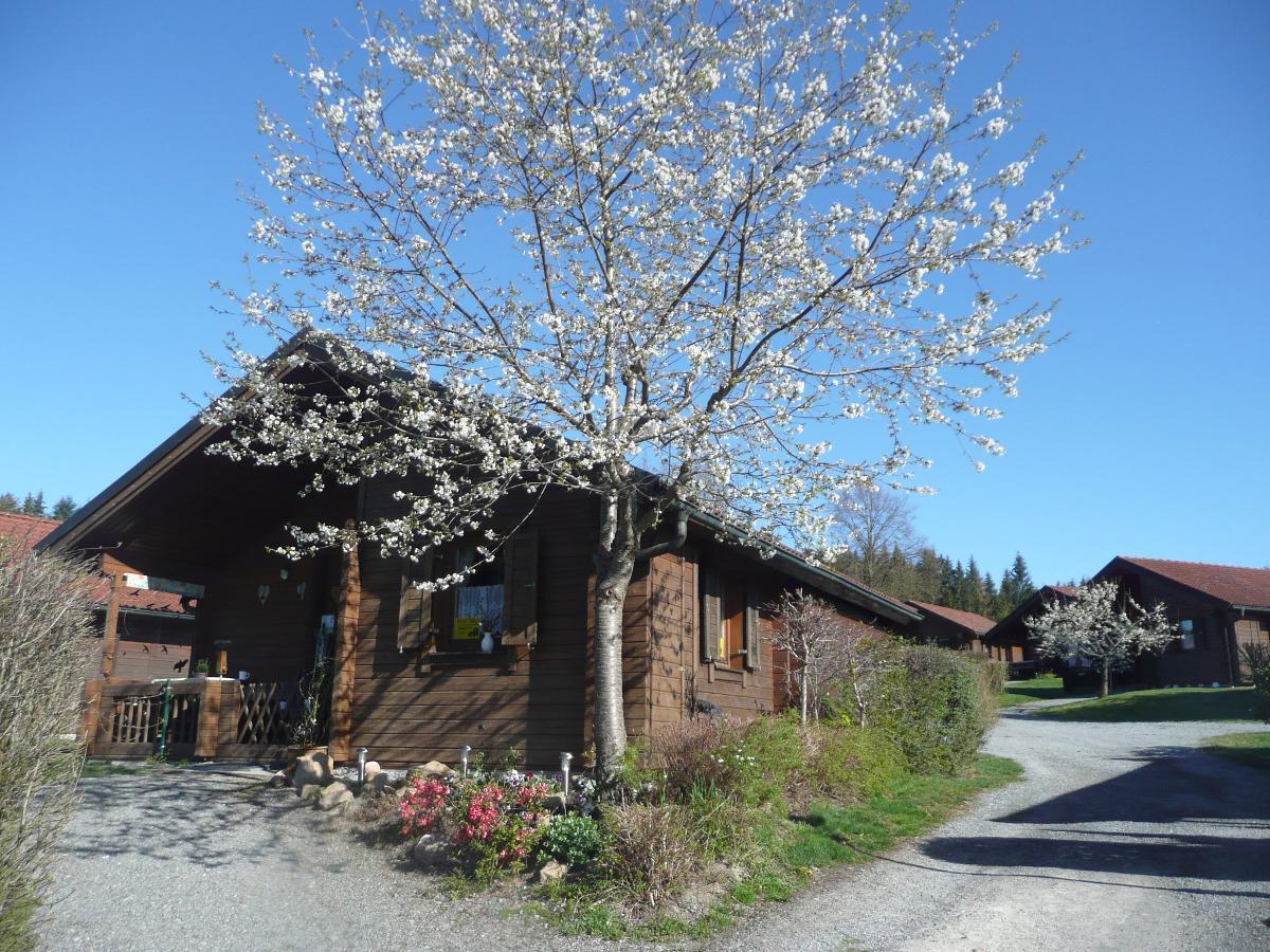Haus Waldhorn in Viechtach