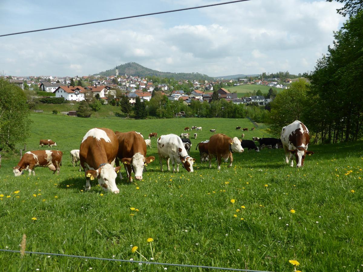 Ferienbauernhof Rosenberger in Hauzenberg