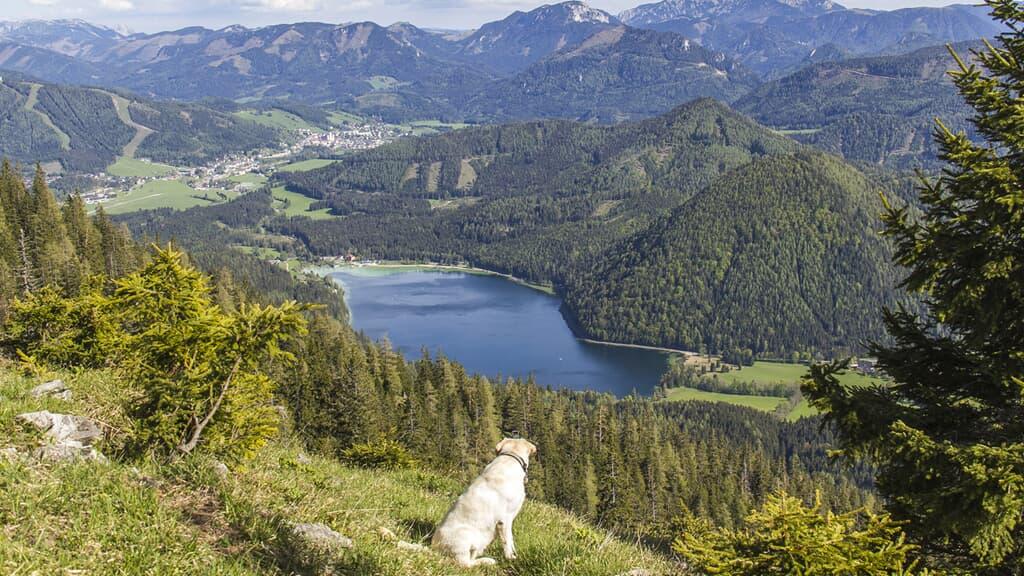 Blockhäuser & Chalets Bayerischer Wald  in Bad Kötzting