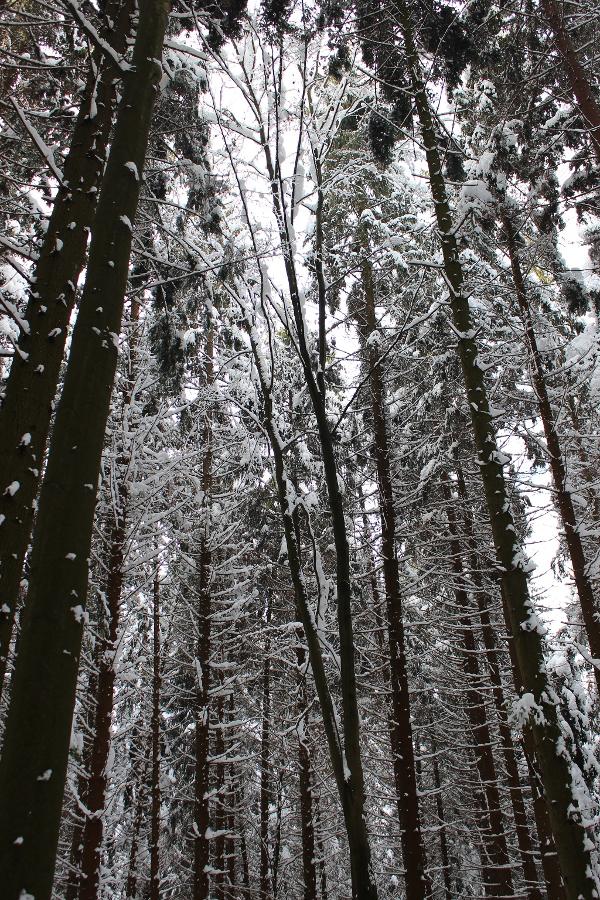 Zur Waldesruh in Waffenbrunn